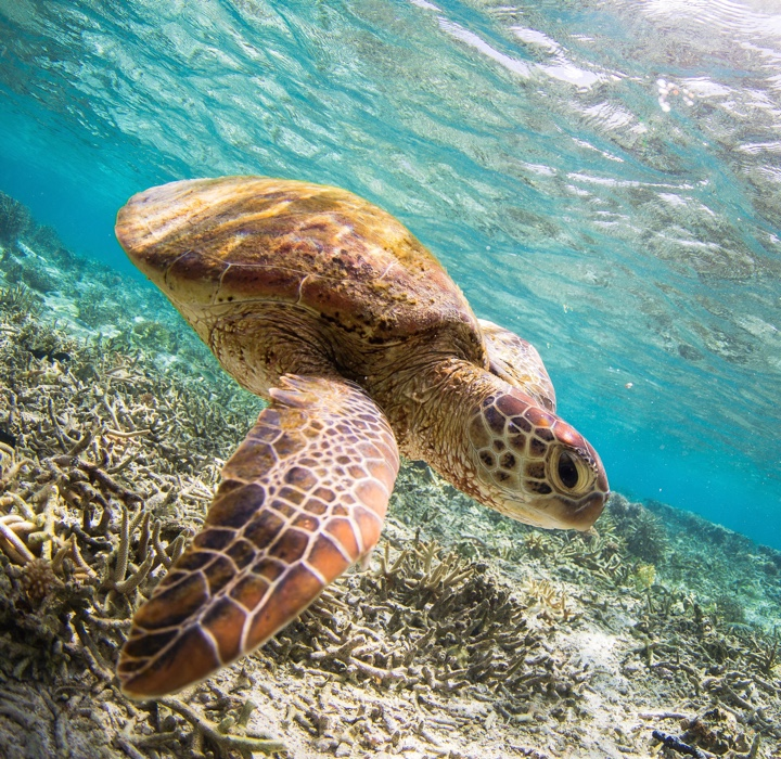 Plastic Oceans International Giving Program Sea Turtle